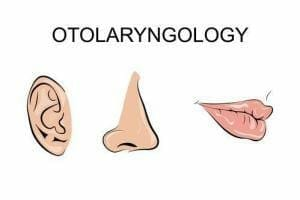 illustration of the nose, ear and lip for dermatology and ENT